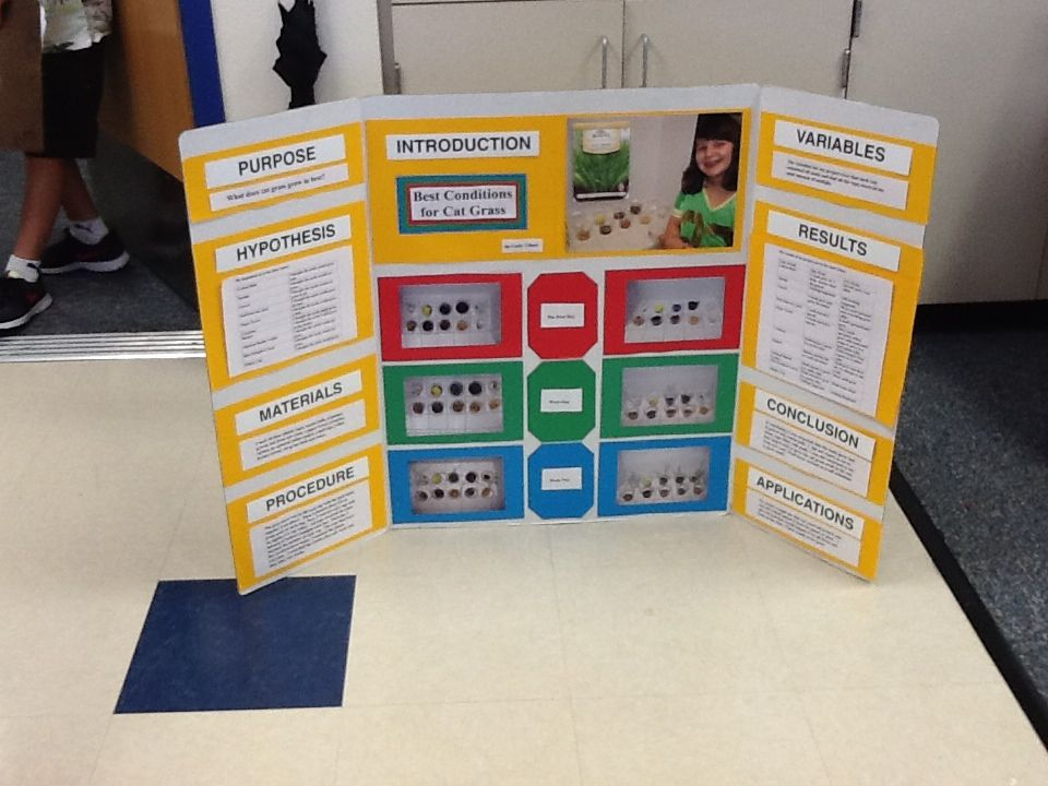 www science fair projects